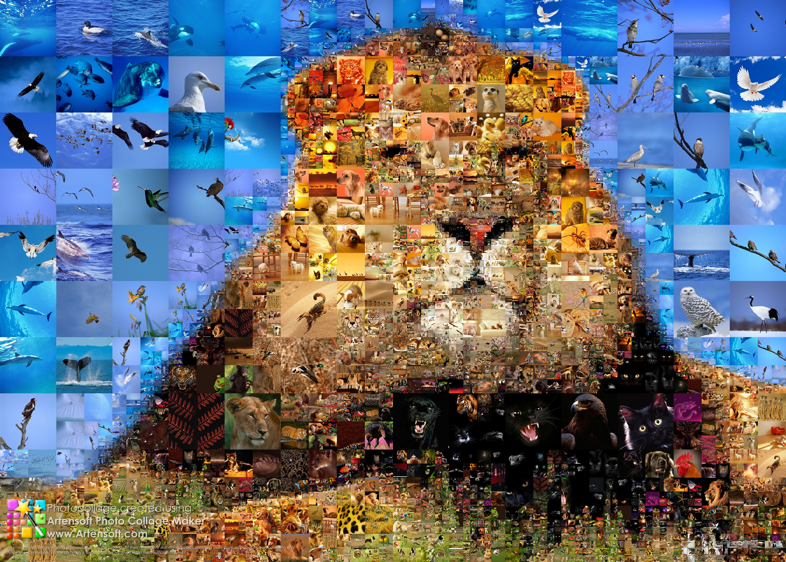 """Photo collage """"King of Animals"""""""