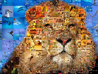 "Photo collage ""King of Animals""."