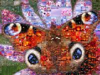 """Wilde Farben der Pflanzen- und Insektenwelt in der Fotocollage """"Schmetterling""""."""