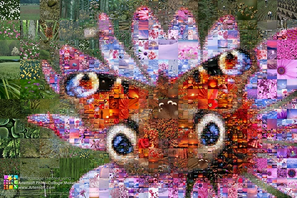 "Rave of color in the world of plants and insects in the photo collage ""Butterfly"""