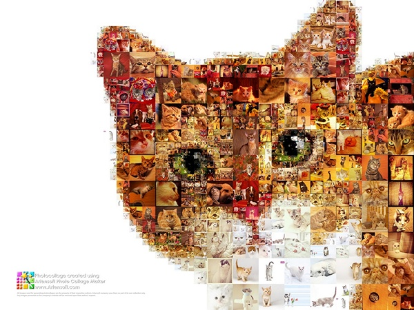 "Large photo collection of cats in the collage ""My dear red friend"""