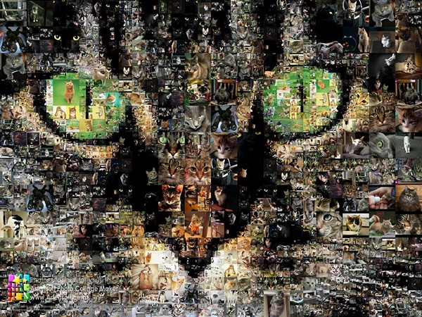 Фотоколлаж Зоркий взгляд тысяч кошачьих глаз