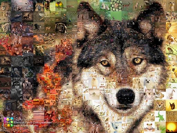 """Коллаж """"Санитар леса"""" из множества фотографий животных"""