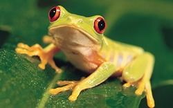 Основа Фотоколлажа Царевна-лягушка