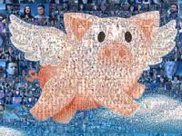 """Постер """"WE BELIVE"""" организации """"Animals Australia"""""""