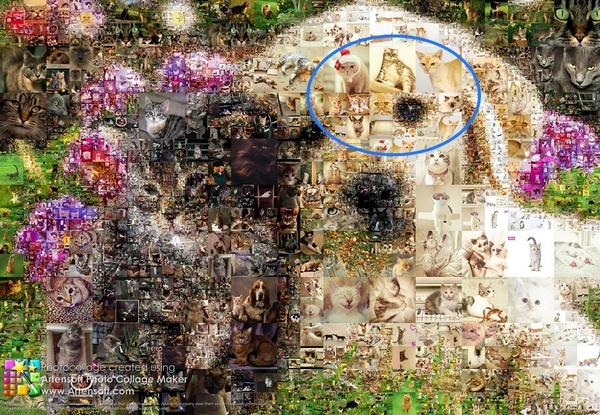 Mit dem Programm Artensoft Photo Collage Maker erstellte Fotocollage